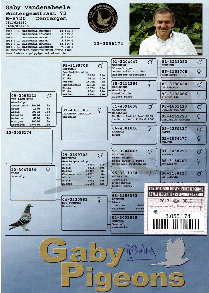 pigeon pedigree image