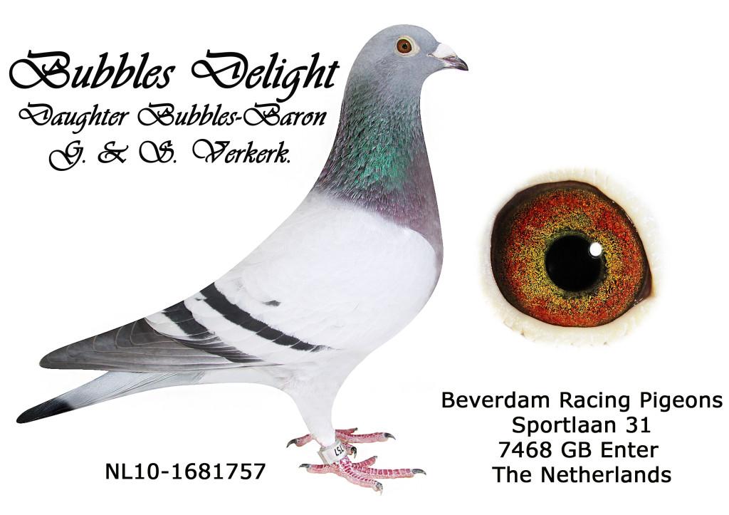NL10-1681757