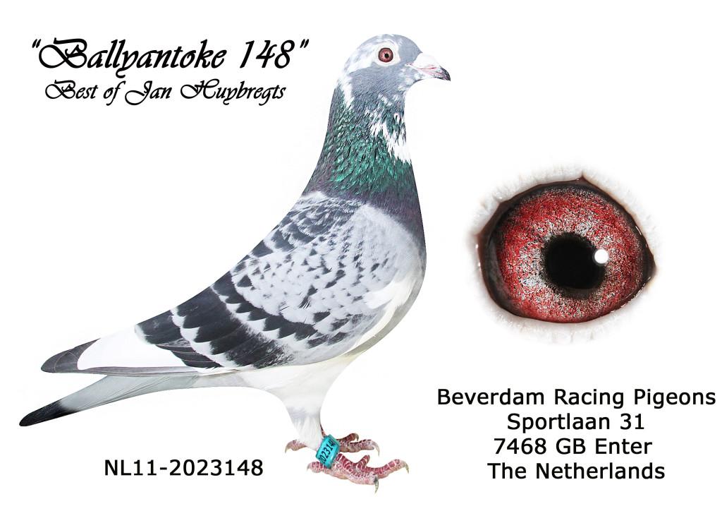 NL11-2023148 L