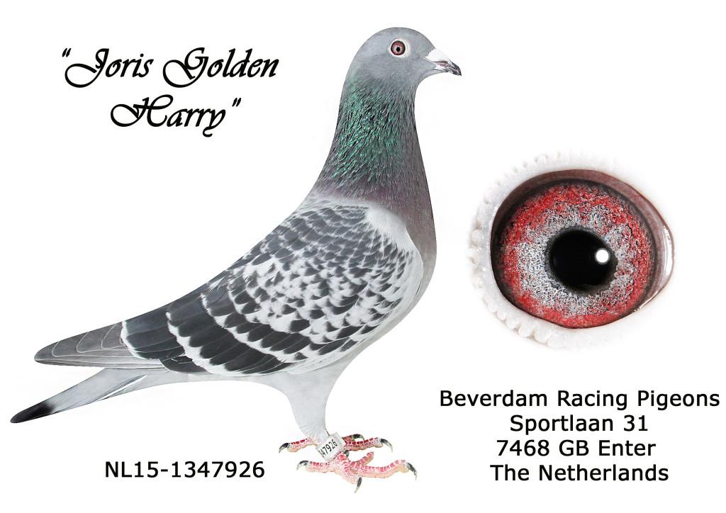 NL15-1347926 L