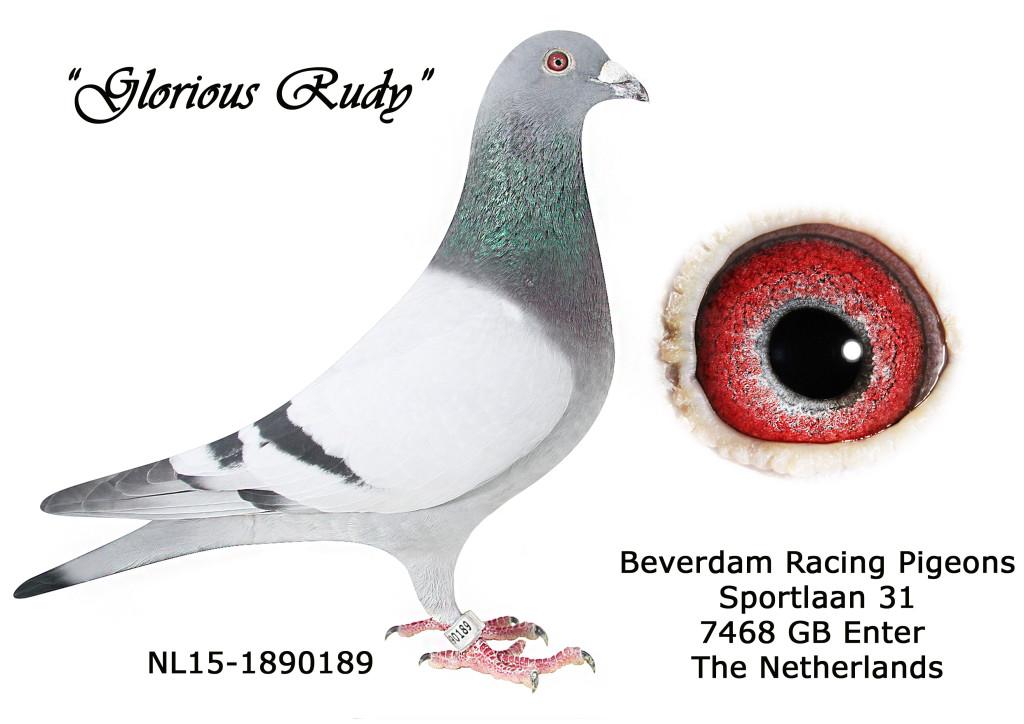 NL15-1890189 L