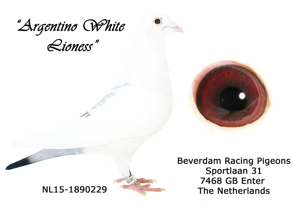 NL15-1890229 L