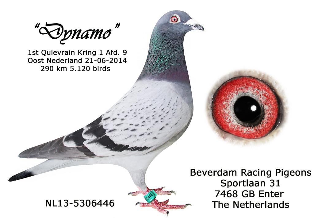 NL13-5306446 1e Quievrain 2014 Kring 1