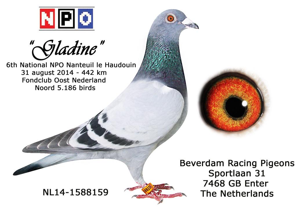 NL14-1588159 6 NPO