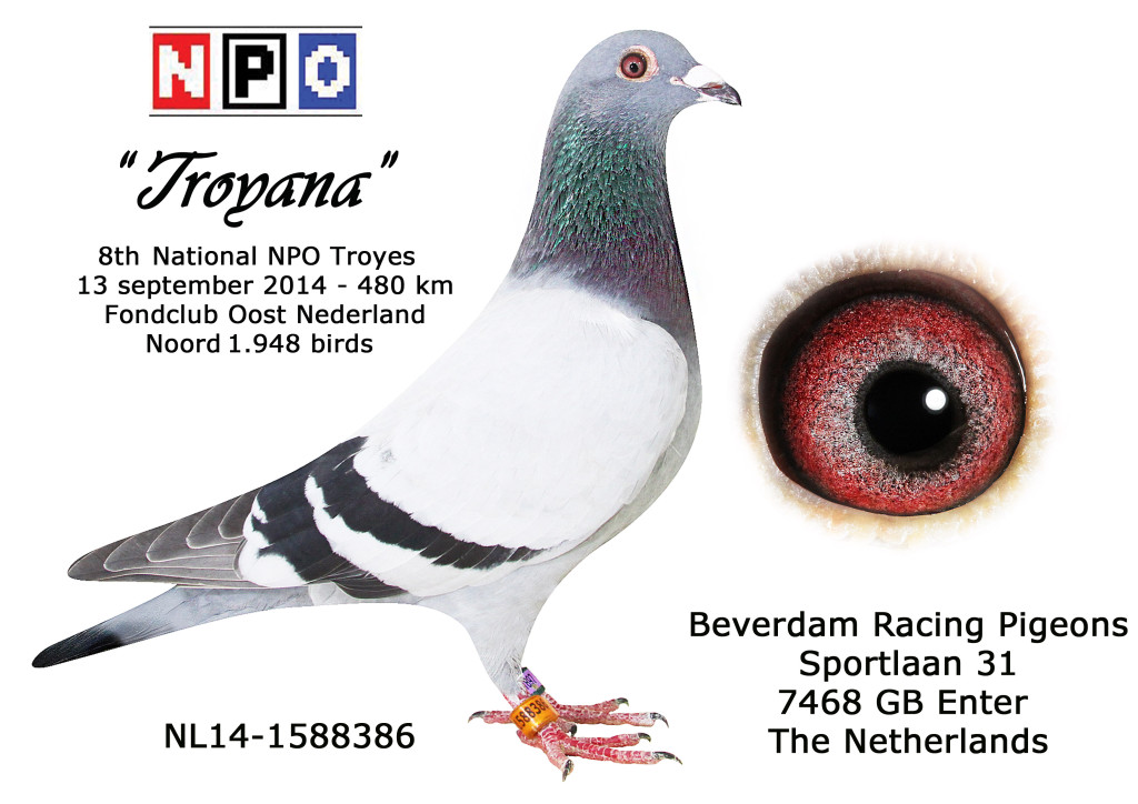 NL14-1588386 Troyana 8 NPO