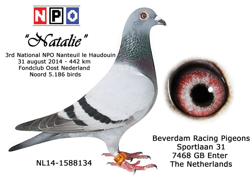 NL14-1588134 Natalie 3 NPO