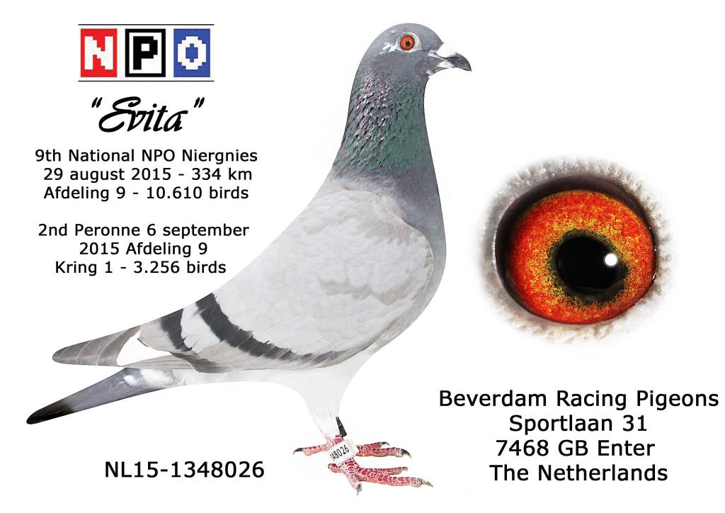 EVITA, ACE YOUNGBIRD 2015 Fond Union Twente ( F.U.T. )