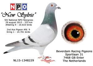NL15-1348229 5 NPO Niergnies 2015