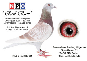 NL15-1348330 24 NPO Niergnies 2015