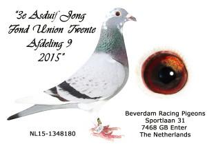 3 Asduif 2015 Fond Union Twente NL15-1348180